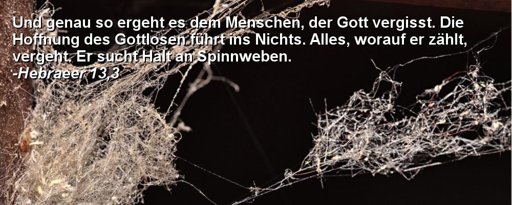Spinnenweben.jpg